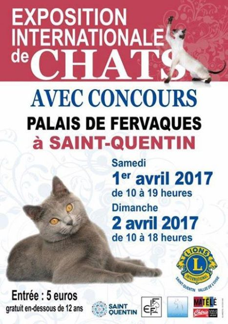 exposition chat