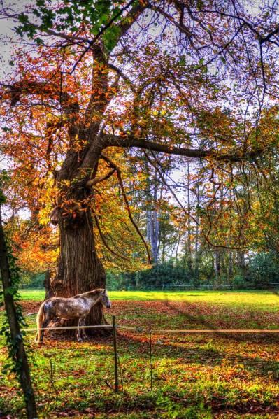 parc du chateau de mello