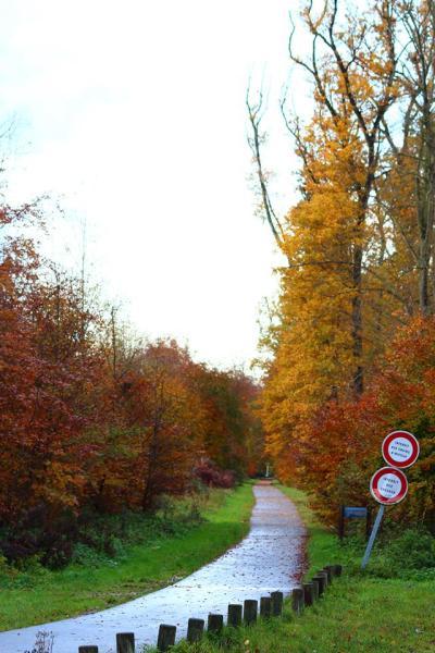 Piste cyclable en foret de Compiègne, route forestière de Béthisy.jpg